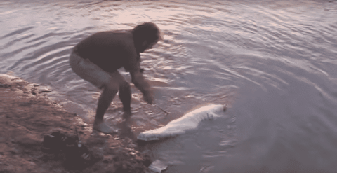 VIDEO: Bowhunter Has A Close Call After Shooting A Crocodile