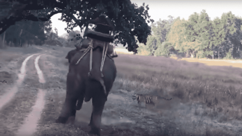 VIDEO: Tiger Tries To Attack Guy Riding An Elephant