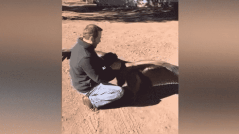 VIDEO: Condor Keeps Coming Back To Visit The Man Who Rescued It