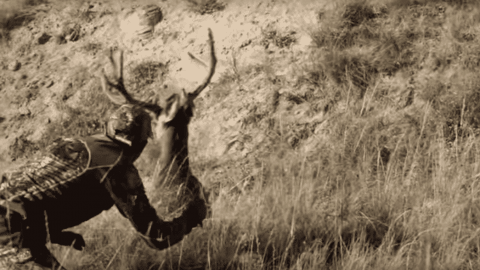 Watch Hunter Sneak Up On Buck And Grab His Antlers