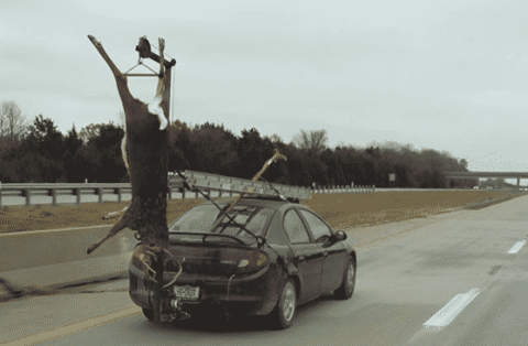 This Is The Most Insane Way We've Ever Seen A Buck Be Transported
