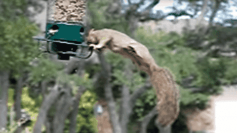 Watch A Squirrel Unintentionally Turn A Bird Feeder Into An Amusement Park Ride