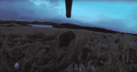 VIDEO: Kodiak Bear Charges Hunter After Getting Hit By Arrow