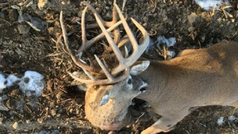 Two-Headed Buck: Deer Harvested With The Attached Head Of A Locked-Up Buck