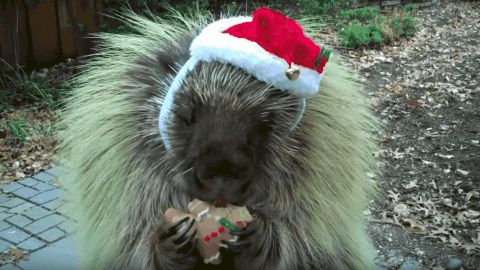 Teddy, The Talking Porcupine, Is Here To Bring In December And Wish You A Merry Christmas!