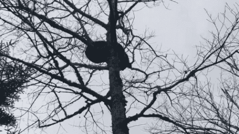 VIDEO: Hunter Has A Really Crappy Day After Chasing Bear Up A Tree