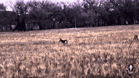 VIDEO: Bloody Buck Fight Doesn't End Well For Either Deer Involved