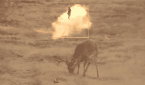 Hunter Takes Takes Aim And Fires At A 10-Pointer; Hits Something Else Entirely