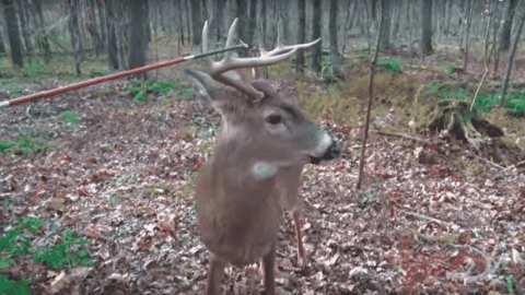 VIDEO: Hunter Touches Buck With An Arrow During The Rut