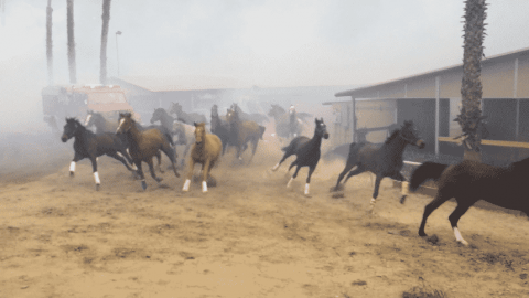 VIDEO: Horses Flee For Safety As Their Stables Catch Fire