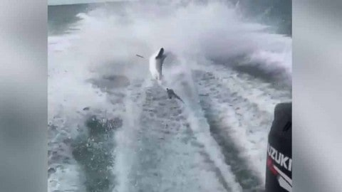 """FWC Charges 3 In Shark Dragging Video For """"Unjustifiable Animal Cruelty"""""""