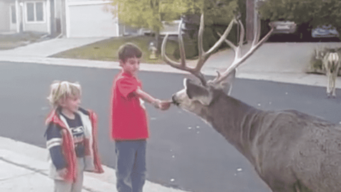 VIDEO: Kids Hand Feed Buck That Wondered Into Neighborhood