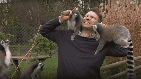 VIDEO: Lemurs Bombard Reporter And Prove They Couldn't Care Less About The News