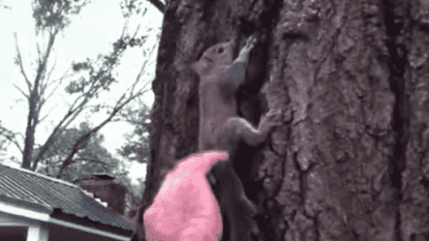 VIDEO: Family Releases A Squirrel They Saved And It's Immediately Attacked