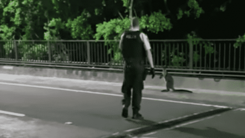 VIDEO: Wallaby Has A Run In With Police After Trying To Cross A Bridge