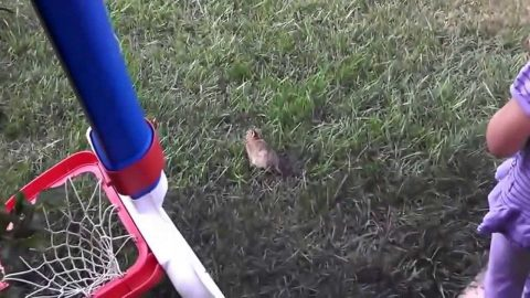 VIDEO: Bunny Release Doesn't Go Exactly As Planned