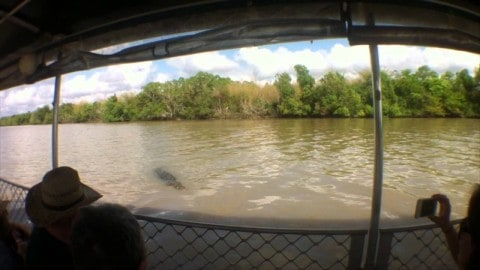 VIDEO: Saltwater Croc Nearly Attacks Tour Guide On Boat