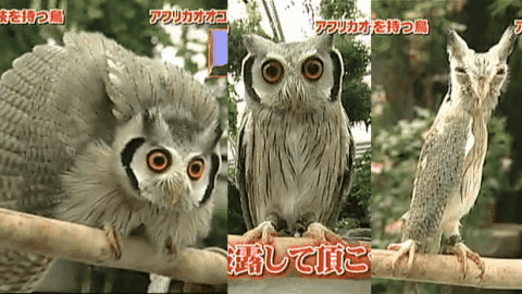 VIDEO: Transforming Owl Is The Stuff Of Pure Nightmares