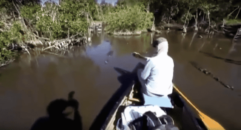 Don't Rock The Boat: Man Screams Bloody Murder As Crocodiles Approach Canoe