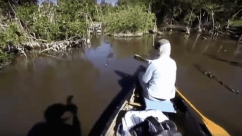 Don't Rock The Boat: Man Screams Bloody Murder As Crocodiles Approach Canoe