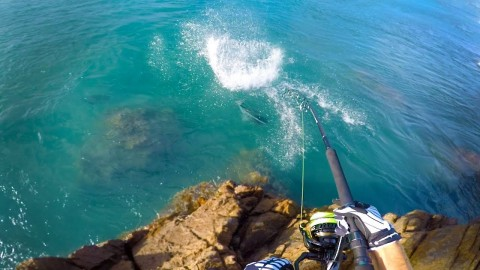 VIDEO: Insane Giant Trevally Hook Up Is Followed By Almost Immediate Heartbreak