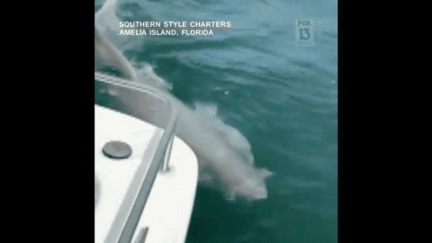 VIDEO: Fishermen Spot Great White Shark Off The Coast