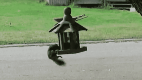 VIDEO: Squirrel Gets More Than It Bargained For After Hopping On Spinning Bird Feeder