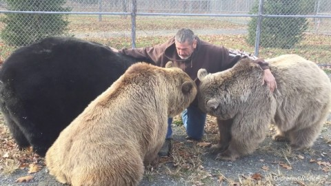 VIDEO: Man Comes Home And Gets Surrounded By Three Bears…Because They Missed Him