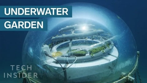 Underwater Farm Grows Crops 30 Feet Below The Ocean