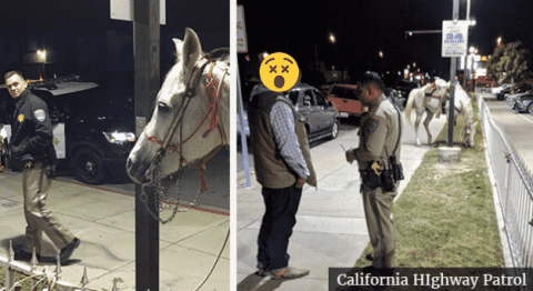 Drunk Guy Riding Horse On The Freeway Gets Arrested