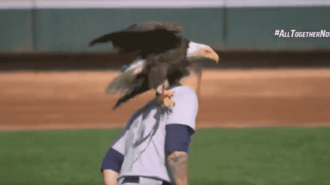 Bald Eagle Lands On James Paxton Right Before Game