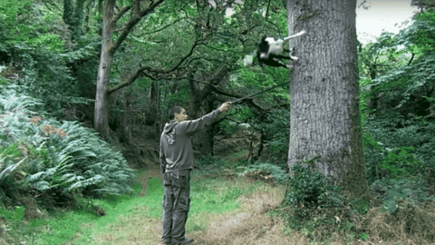 Watch Insane Parkour Collie Flip And Fly Through Forest