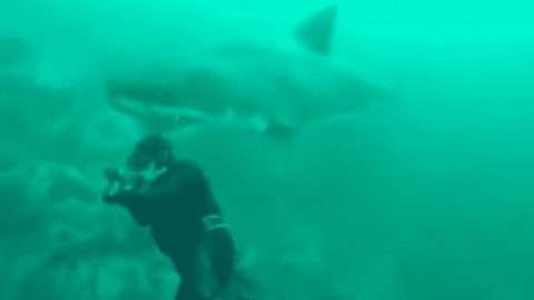 VIDEO: Scuba Diver Nearly Has His Head Bitten Off By Great White Shark