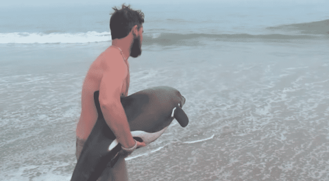 VIDEO: Man Rescues Stranded Young Dolphin After Discovering It On Shore