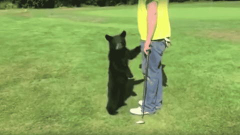VIDEO: Black Bear Cub Runs Up And Hugs Golfer