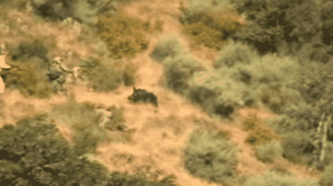 VIDEO: Hunters Drop Charging Boar Just In Time