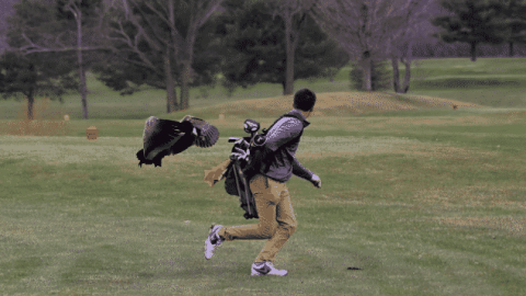 High Schooler Golfer Gets A Different Kind Of Birdie When Goose Attacks Him After Tee Off