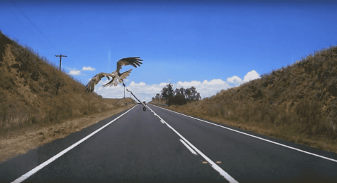 VIDEO: Eagles Hate Road Trips So Much They Throw Snakes At Cars
