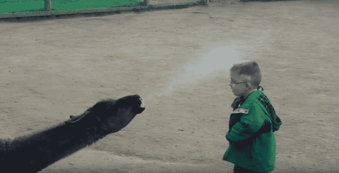 VIDEO: Kid Finds Out He's Worn Out His Welcome The Hard Way When A Llama Spits In His Face