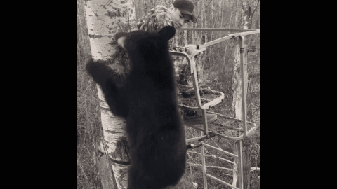 VIDEO: Black Bear Joins Hunter In Treestand During His First Bear Hunt