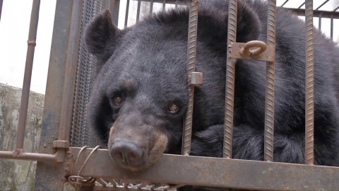 Family Realizes Their Pet 'Puppy' Is Really An Endangered Asiatic Black Bear