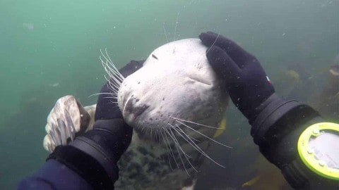 VIDEO: Excited Seal Just Wants To Be Petted By Scuba Diver