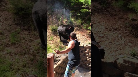 Black Bear Crashes BBQ And Ruins Everyones Dinner