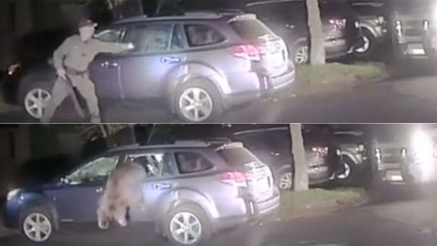 VIDEO: Deputy Helps Free A Bear That Got Trapped In A Subaru