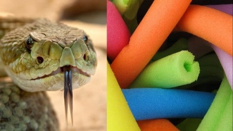 Fire Department Warns That Snakes May Ruin Summer By Hiding In Pool Noodles