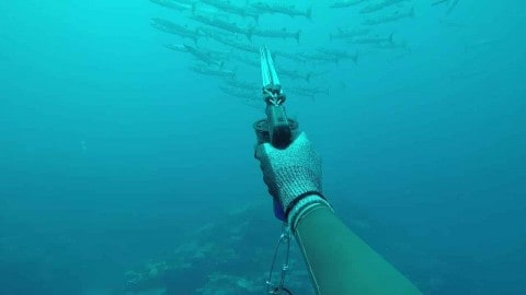 Watch Two Sharks Rip Apart A Spearfisherman's Fresh Catch