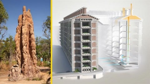 Termite Inspired Building Cools Itself Without Air Conditioning