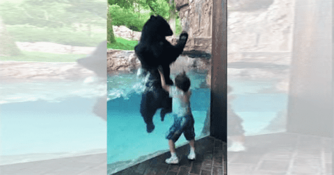 VIDEO: Bear And A Five-Year-Old Play And Jump Together