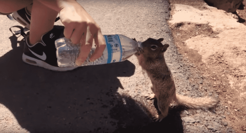VIDEO: Squirrel Gets An Assist With Its Water Break