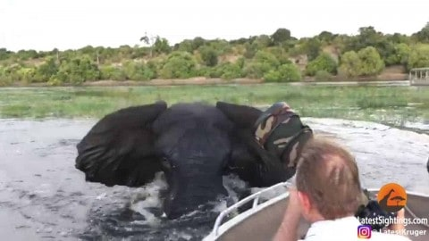VIDEO: Elephant Charges And Rams A Boat Full Of Tourists